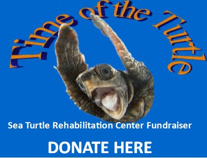 version 2 time of turtle Facebook ad