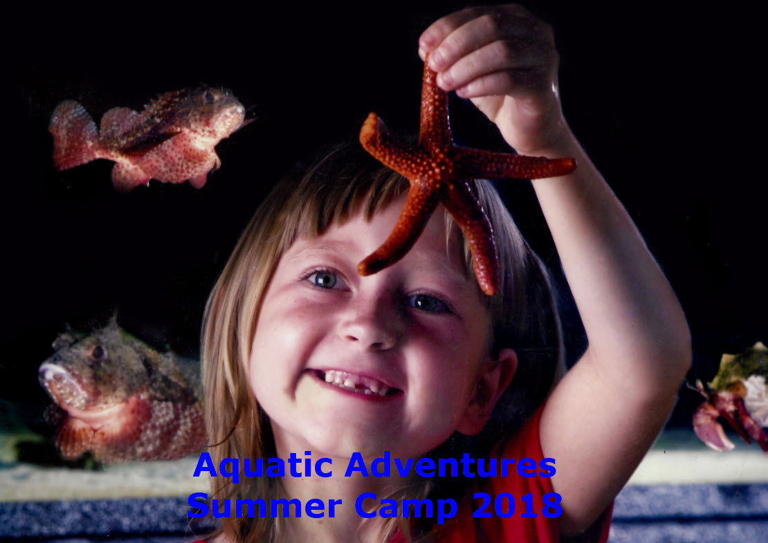Aquatic Adventures Summer Camp 2018